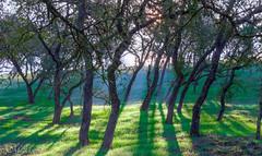 untitled-439_40_41HDR.jpg (Darkiller45) Tags: california morning trees green fog canon landscape north sunny hills westcoast hdr t3i