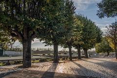 les bords de Loire  Combleux (Pierre ESTEFFE Photo d'Art) Tags: france eau bateau loire fleuve gabare combleux loiret45