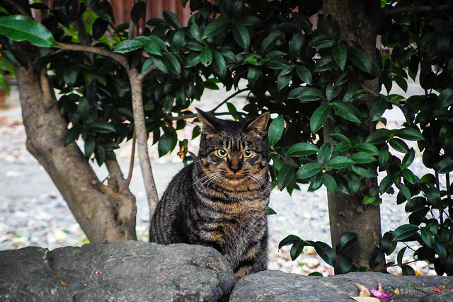Today's Cat@2014-11-21