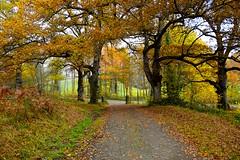 _DSC1104 (andoni.guridi) Tags: autumn fall spain otoño navarra 2014 basaburua