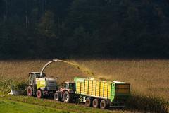 Anhäckseln (Fotos aus OWL) Tags: landwirtschaft mais agriculture ernte bga biogas häckseln classjaguar