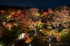 (GenJapan1986) Tags: autumn japan night garden temple kyoto    25mm 2014       nikond600  zf2 distagont225