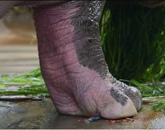 1469 (Jasper Kyodaina) Tags: man guy feet giant paw squish sole stomp crush giantess trample