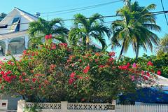 Key West (Florida) Trip, November 2014 0004Ri 4x6 (edgarandron - Busy!) Tags: flowers houses house flower keys florida bougainvillea keywest floridakeys elizabethstreet