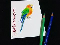 2015_01_01_parrot_02_s (blue_belta) Tags: bird art sketch drawing parrot draw coloredpencil