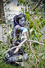 jsspphotographie (1) (jsspphotographie.com) Tags: painting body arts mimi stpierre collaboration avec lorie photographe hamel jeansébastien troisrivières cauchemare jsspphotographiecom