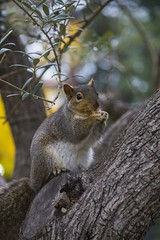 W99A1637 (J. Cahn) Tags: california trees tree green nature colors animal animals canon squirrel squirrels vibrant wildlife filter nd 5d canon5d dslr canondslr ndfilter 24105mm canon24105mm canon24105 variablendfilter canon5dmarkiii 5dmk3 5dmarkiii 5dm3 variablend 5dmark3 canon5dmark3 tiffenvariablend