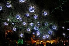 IMG_1562 (snoodz) Tags: christmas garden lights al pretty nightlights alabama christmaslights theodore 2014 bellingrathgardens