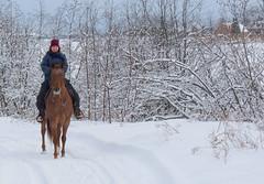 La randonne.. (Amiela40) Tags: winter horse cheval hiver randonne