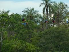 Doline - Macaws (altaircostajr) Tags: brazil das buraco macaws araras doline