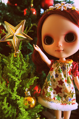 Regaliz preparing for Christmas