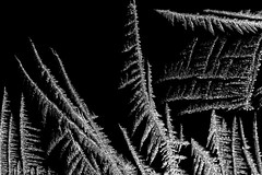 """Ice Crystal on a Cold Day • <a style=""""font-size:0.8em;"""" href=""""http://www.flickr.com/photos/92159645@N05/16049004659/"""" target=""""_blank"""">View on Flickr</a>"""