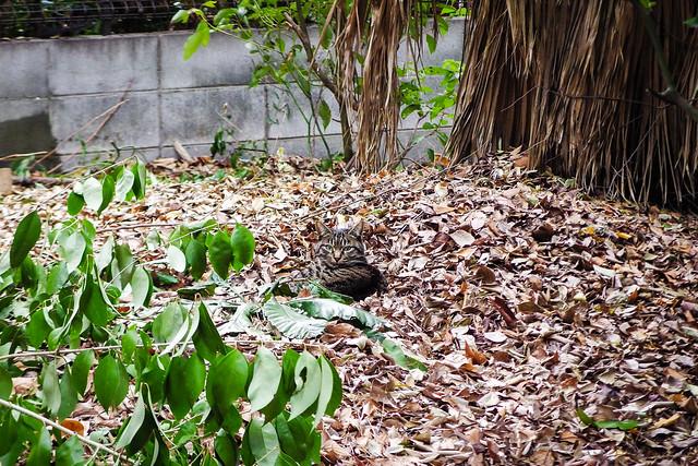 Today's Cat@2015-01-03