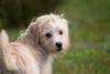 Looking back (Dadriel) Tags: portrait dog animal sortof