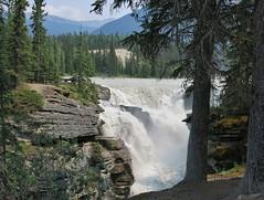 Jasper NP ~ Athabasca Falls - HCS! (karma (Karen)) Tags: trees canada mountains topf25 rocks shadows pines waterfalls alberta rivers 4summer athabascafalls canadianrockies jaspernp canadanationalparks icefieldspkwy