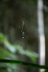 Rencontre de promenade (Ye-Zu) Tags: voyage trip forest spider thalande foret araigne thailande phangnga worldtour tourdumonde changwatphangnga tambonnoppring