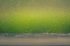Song of rain! (ashik mahmud 1847) Tags: color green rain background raindrops nikkor bangladesh d5100