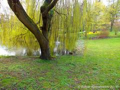 Bad Nauheim Kurpark Ruhepol (edgarkowa) Tags: park wasser ruhe trauerweide