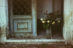 Composition with flowers (Victoria Yarlikova) Tags: pellicola expired royal class 100 zenit film scan analog cemetery composition flowers 35mm darkroom small format cimitero decay old forgotten helios442 stilllife traditionalprocess zenit122
