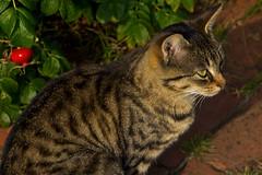 IMG_5823 (Lightcatcher66) Tags: florafauna makros katzencats lightcatcher66
