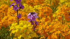 P1070726 (MartinMVZ) Tags: flower prague praha most hradany karlv
