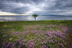 Klverslekta (vandrende) Tags: norway landscape norge moss nor paysage norvege stfold landskap jely refsnes ostfold