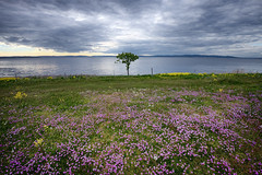 Kløverslekta (vandrende) Tags: norway landscape norge moss nor paysage norvege østfold landskap jeløy refsnes ostfold