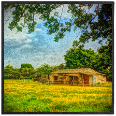 Day 165 of 366 - Cabin in the woods! (editsbyjon) Tags: plant painterly field grass landscape cabin outdoor serene stable iphone berkswell painteresque photoborder iphone365 iphoneography snapseed phototoaster mextures exposergl