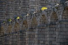 Roman civil engineering work (ramosblancor) Tags: humanos humans acueducto aqueduct arquitectura architecture ingeniera engineering romanos romans segovia acueductodesegovia castillaylen historia history ciudades cities