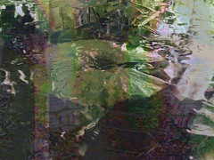 Dipping the Toes (Rantz) Tags: pond toes darwin 365 roger glitch pondering northernterritory thepond mobilography rantz doesanyonereadtagsanymore pondaliciousness mobilographypad2016 psad2016
