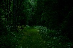 (Frida J) Tags: forest path green summer landscape grass nature flowers dark woods trees sweden vrmland
