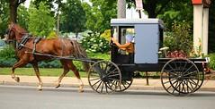IMG_3748 (joyannmadd) Tags: amish horses intercourse pennsylvania kitchenkettlevillage farm animals lancaster coumty pa farms nature outdoors
