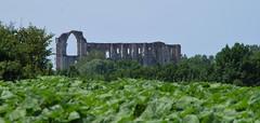 160623 ChV09 06 Maillezais (Balades & Randos) Tags: marais abbaye maillezais vende ruines