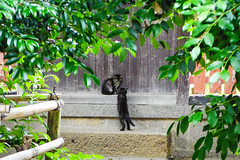 Today's Cat@2016-06-19 (masatsu) Tags: cat pentax catspotting mx1 thebiggestgroupwithonlycats