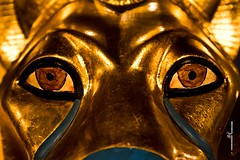 Lion - Detail (max.fontanelli) Tags: king treasure tomb egypt re tesoro tomba egitto oro tutankhamun pharaon golg faraone