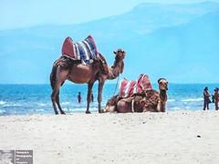DSCN5665-2 (Pendore) Tags: holidays vacances plage mer maroc marocco