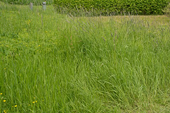 What to do with tall grass - Click to see (atranswe) Tags: dsc2276 sweden sverige vstranorrland ngermanland vja latn625818lone17427 heighgrass hgtgrs lie scythe atranswe