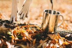 Autumn Soul (Yuliya Bahr) Tags: dog autumn leaves october yellow orange pets tea paws animals basenji stilllife berlin forest allday