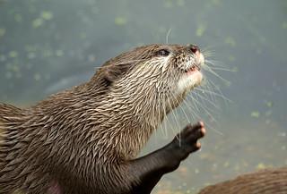 Otter High Five
