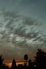 (melissa.dehoog) Tags: sunset outdoor telephonewires bayarea california clouds trees