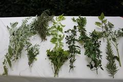 Une partie des plantes