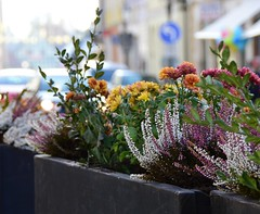 (:Linda:) Tags: germany thuringia town hildburghausen flowerbox erica