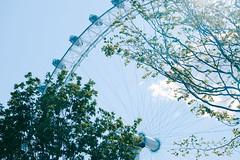 dream land (magicmoment.z) Tags: light sky tree london wheel londoneye fujifilm 55200mm xe1