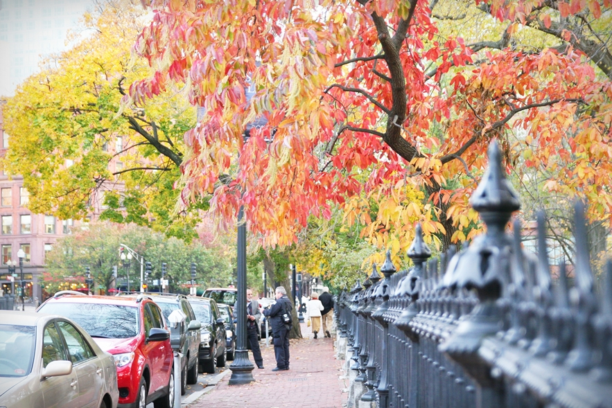 波士頓秋天 boston-common-public-garden-autumn-17