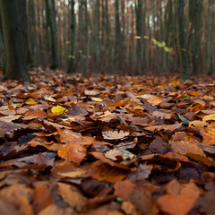 Autumn Leaves (JohKl) Tags: autumn orange leaves gelb grn blatt wald bltter baum dualiso