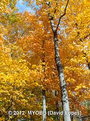 Duke Farms-203299 (myobb (David Lopes)) Tags: fall nature newjersey nj duke olympus leafs tress hillsborough e510 dukefarm