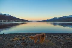 Evening in Faskrudsfjordur (*Jonina*) Tags: dog reflection evening iceland village 500views hundur sland briard speglun 25faves bergerdebrie fskrsfjrur faskrudsfjordur orp sdegi bergerbriard jnnagurnskarsdttir
