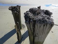 Wooden (lotos_leo) Tags: atlanticcity newjersey graphics outdoor wooden texture