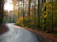 The winding road (joeke pieters) Tags: road november autumn holland fall netherlands forest woodland woods herfst nederland bos achterhoek winterswijk weg gelderland bekendelle woold platinumheartaward panasonicdmcfz150 1190160