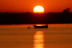 DSC01771 - Sunset (steve R J) Tags: sunset two tree landscape island reserve essex leighonsea ewt